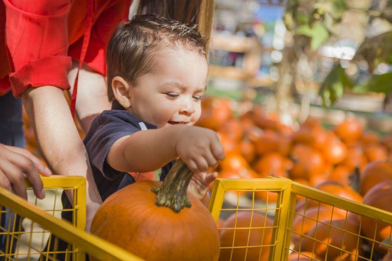 Halloween Food Deals 2020 Idaho Falls Top five Halloween activities near Idaho Falls
